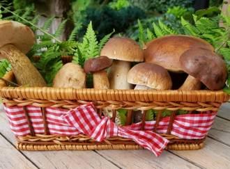 Mushrooms - G1