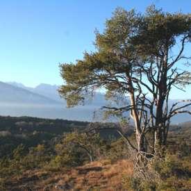 Naturreservat Alta Val di Cembra-Avisio - FI